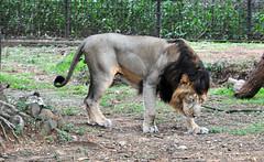 mysore zoo 17