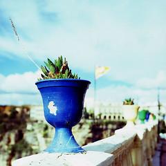 Andalucian Blue (Superlekker) Tags: plant casa spain andalucia patio tiles ronda don bosco serrania