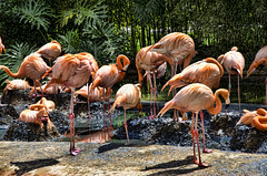 Zoo de Barcelona (4).- (ancama_99(toni)) Tags: barcelona vacation espaa fauna zoo spain nikon flamingos catalonia catalunya vacaciones barcellona catalua barcelone flamencos 1000views 18105 2014 catalogne 10favs 10faves 35favs 25favs 35faves 25faves ltytr1 d7000
