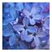 Variation bleues - Blue Variations