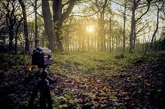 Medium Format (nijachem01) Tags: trees sunset summer portrait orange sun mamiya film forest mediumformat woods warm xa2 olympusxa2 mamiya645 120mm ektar filmphotography filmisnotdead kodakektar istillshootfilm
