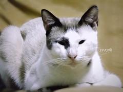 #Still #Remember (roizroiz) Tags: cats cute cat interestingness yesterday interesantsimo stillremember photophotospicpicspicturepicturessnapshotartbeautifulflickrgoodpicofthedayphotoofthedaycolorallshotsexposurecompositionfocuscapturemoment