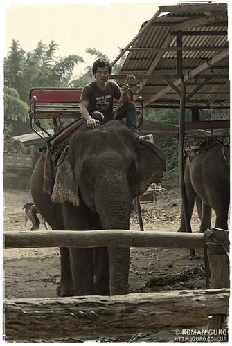 Предводитель слонов | Thailand