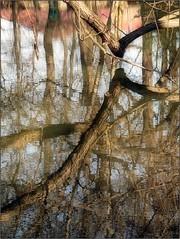 (Tlgyesi Kata) Tags: winter water botanicalgarden vcrtt botanikuskert vcrttibotanikuskert withcanonpowershota620 nemzetibotanikuskert
