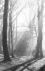 foggy woods 2 (Justin Caveill) Tags: canon fields l 70200 f4 pontcanna 5dmark2