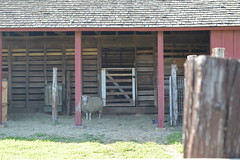 At Nash Farm in Grapevine Texas. (People, Places & Things) Tags: texas grapevine nashfarm