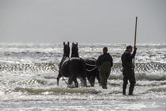 2016-Ameland043 (Trudy Lamers) Tags: wadden ameland eiland paarden reddingsboot reddingsactie
