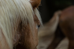 Bokeh with horses (Irina1010) Tags: portrait horse eye canon lashes bokeh middletonplace 34 mane outstandingromanianphotographers