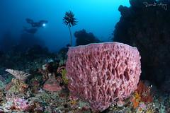 Barrel (Randi Ang) Tags: canon indonesia photography eos underwater angle south wide dive scuba diving fisheye ang sarang gili lombok 15mm randi 6d belongas