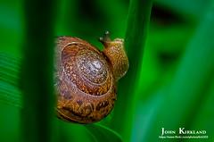 Escargot on the Vine (KIRK333) Tags: park sc nature photoshop canal state south snail adobe carolina escargot topaz lightroom catawba on1 29704 landsford 2051parkdr