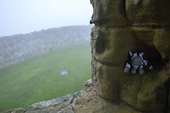 Monkey Up North - Scarborough Castle (monkey_pgtips) Tags: castle abbey monkey yorkshire lincolnshire whitby scarborough lyveden