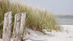 Urlaub (Don Bello Photography) Tags: frhling 2016 prerow strand ostsee balticsea strandgras nationalparkvorpommerscheboddenlandschaft mecklenburgvorpommern norddeutschland northerngermany dars acdsee acdseeultimate9 panasonicphotographer panasonicfz1000 lumixphotographer lumixfz1000 reinhardbellmann donbello donbellophotography sepia urlaub 50favorites 1000views 100favorites 2000views 3000views 150favorites europa europe 4000views fz1000 5000views