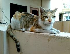 Alley Princess! (farrukhathar) Tags: november pakistan pet beautiful animal wall cat nokia eyes alley princess tabby tail kitty stray lahore 2012 n73
