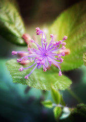 (ivano2404) Tags: flowers flower nature colors blossom fiori
