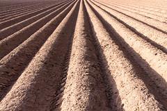 Furrowed (Eddie_UK) Tags: field earth farming soil furrowed furrows