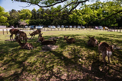Nara deers (TheSpaceWalker) Tags: japan photography photo nikon pic deer 1750 nara tamron d300 thespacewalker