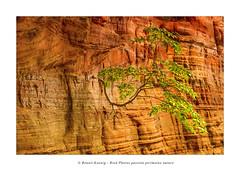 altschlossfelsen-4104 (Photo Passion Benoit) Tags: paysage arbre roche vosgesdunord altschlossfelsen