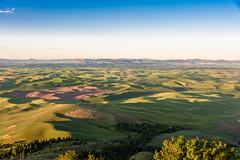 DSC_4184 (jlove60) Tags: spring rollinghills greenfields steptoebutte thepalouse
