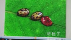 DSC07632 (yongheecs永和社大生態保育社) Tags: 林場