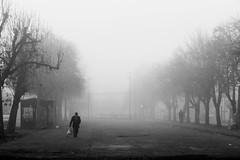 Secular Haze (Viajera Errante) Tags: chile plaza viaje winter bw maana haze rboles hiver bn caminos ciclista invierno niebla hombre rutas temuco ramas caminante araucana