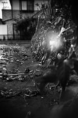 (sol) (Dinasty_Oomae) Tags: street blackandwhite bw monochrome tomato blackwhite outdoor chiba zeissikon boxcamera funabashi      boxtengor