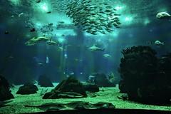 DSC_4632 (lediabn) Tags: lisbon acquarium sealife