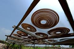 Incense Coils (MelindaChan ^..^) Tags: china factory mel melinda coil joss incense xinhui  chanmelmel melindachan