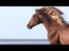 Voyage d'Hermès (zave72) Tags: fragrance hermes hermesbag hermesbirkin horse menampwomen parfums pegasus perfume voyage voyaged039hermes wingedhorse