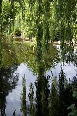 V 11 Spegling (lennart.axel) Tags: reflection malm spegling segepark dogwood11