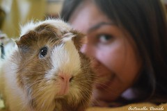 Sonrie a la camara ! / smiles at the camera ! (Tornasolar) Tags: portrait pet love guinea pig guineapig cuy cool funny mascota cobaya cobayo cuye conejillodeindias