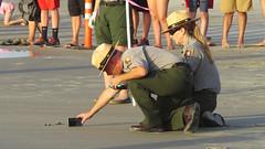 498.1 (mikehogan2) Tags: texas nationalparkservice padreisland seaturtles nationalseashore kempsridley