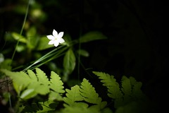 Alone in the ray of light (Bullpics) Tags: light plant flower forest nikon ray dof bokeh outdoor sunbeam d7100