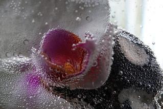 Orchidee im Blubberbad