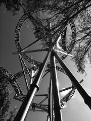 infinity (nicolassardella) Tags: travel vacation usa metal gardens florida infinity roller coaster steele busch