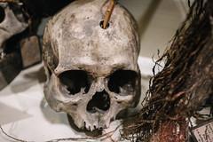 QF4C7711 (leslilundgren) Tags: museum skull bones pittriversmuseum
