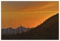 Sonoran Desert Sunset (gauchocat) Tags: arizonasonoradesertmuseum tucsonarizona
