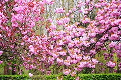IMG_4556 (Irina Souiki) Tags: parcdesceaux france paris sceaux flowers nature parc park