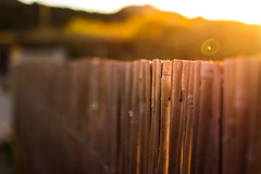 Beyond the bamboo (thethomsn) Tags: bamboo fence sunset light flare lensflare primelens closeup garden goldenhour magical sigma 30mm fencefriday hff dof bokeh color focus thethomsn