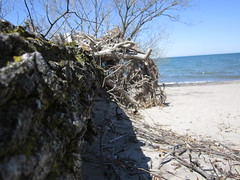 IMG_0653 (facelesman) Tags: tree beach landscape log sand day sunny perspectiv