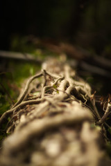 fallen log in moseley bog (arrowlili) Tags: wood light log vines bokeh curves lotr fallen 365 shire moseleybog odc totw