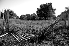 Don't Fence Me In (johnersis) Tags: blackandwhite tree monochrome fence nikon surrey richmondpark d90 johnpenberthy