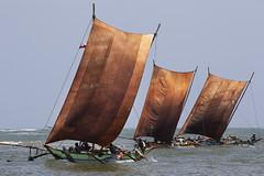Fishing boats in Sri Lanka (Bertrand Linet) Tags: fish boat fishing asia srilanka ceylon fishingvillage prao ශ්රීලංකාව இலங்கை bertrandlinet śrīlaṃkāva ilaṅkai