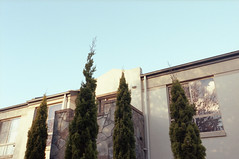 i Ĭ ĭ i (jamiehladky) Tags: trees film up 35mm canon looking kodak australian australia iso 400 canberra portra act eos3 ainslie portra400 1635mmf28lii jamiehladky hladky