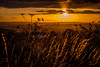 Sunset over Stoke on Trent (Raven Photography by Jenna Goodwin) Tags: sunset summer grass sunshine clouds golden trent hour end stokeontrent staffordshire stoke hanley flickrfriday lifeislikeaboxofchocolates removedfromflickrfridaynotthecurrenttheme