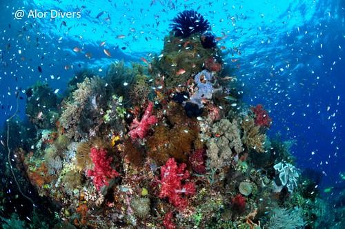 tuaban afternoon dive. Pantar island