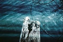 (Rebecca Dreyfus) Tags: light film nature portraits 35mm outdoors photography lawrence nikon path kansas fujifilm 800 leaks 8008s