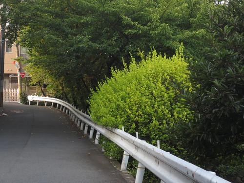 緑のガードレール