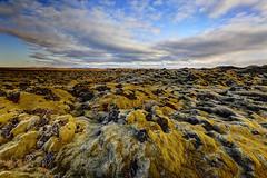 Lava and Moss (Kiddi Einars) Tags: island lava iceland islandia moss mosi hraun hafnarfjararhraun
