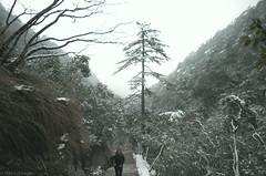 Mt_Huangshan3
