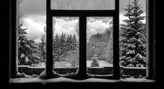 Winter Window (valent68) Tags: windows winter light bw test white mountain snow black tree nature beautiful blackwhite kitten break sad noiretblanc snowy kittens explore paysage viewfrommywindow flickrfriday impressedbeauty